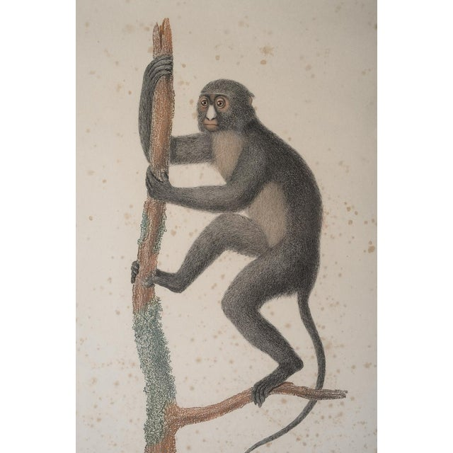 18th-C. Colored Monkey Print by Jean Baptiste For Sale In Los Angeles - Image 6 of 6