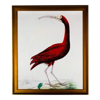 Scarlet Ibis Acrylic Painting on Canvas by Y. Olson For Sale