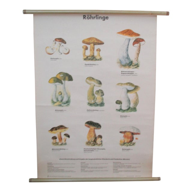 Vintage German School Science Mushrooms Chart - Image 1 of 7