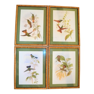 Vintage Framed Lithograph by J Gould & H C Richter- Set of 4 For Sale