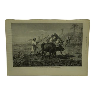 """Late 19th Century Antique The Illustrated London News """"Ploughing in Lower Egypt"""" Print For Sale"""