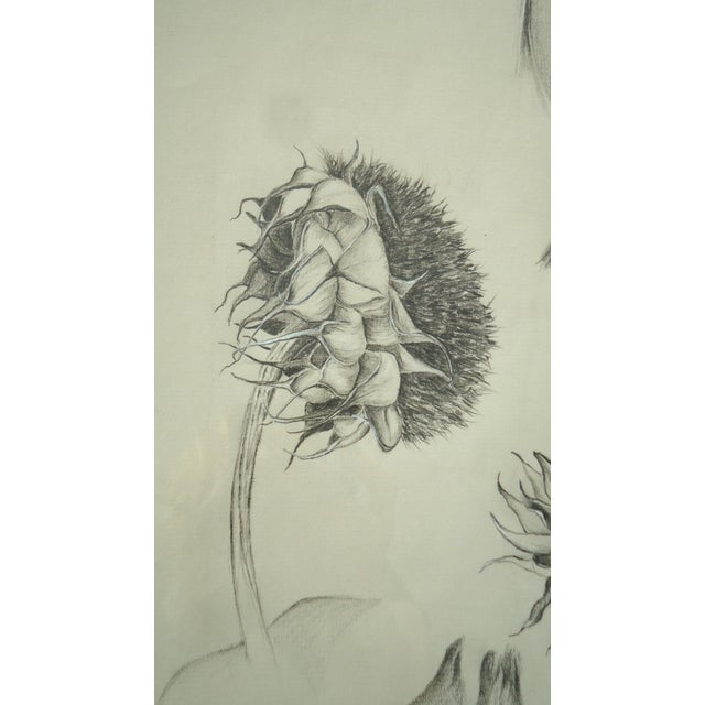 Julie Schaefer Sunflower Study Drawing For Sale - Image 4 of 5