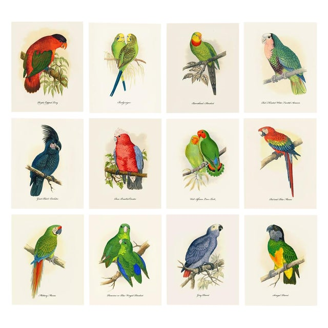 1884 Alexander Francis Lydon, Parrot Reproduction - Set of 12, N2 For Sale