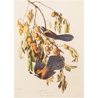 1966 Cottage Lithograph of Florida Jay by Audubon For Sale