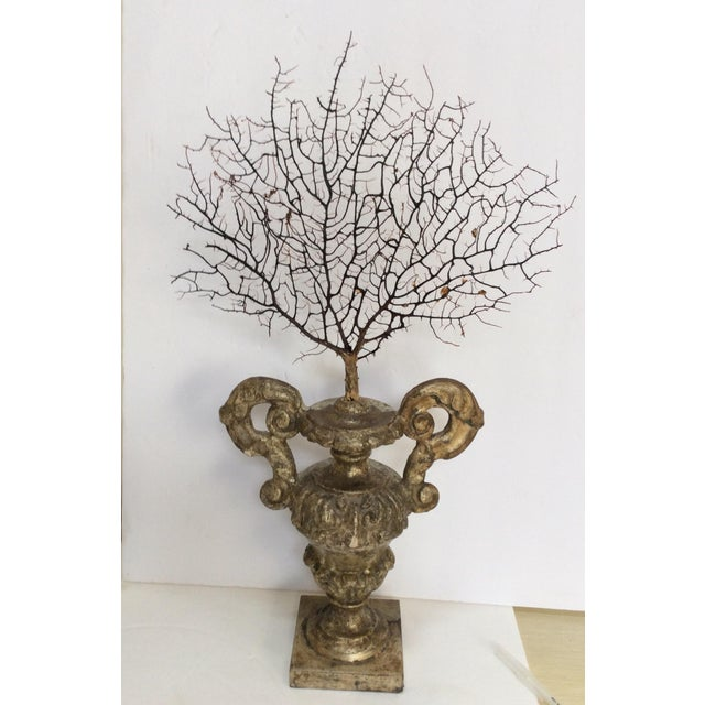 Antique Italian Silvered Wood Urn With Sea Fan For Sale - Image 5 of 7