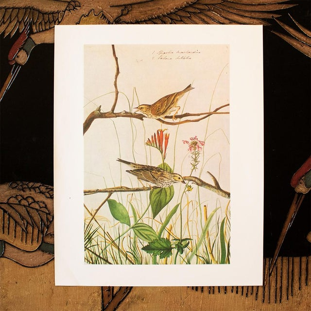 1960s Vintage Savannah Finch and Savannah Sparrow Cottage Print by Audubon For Sale In Dallas - Image 6 of 8