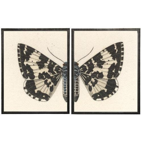 Split Black and White Butterfly in Pewter Shadowbox 2 frames make up this set.