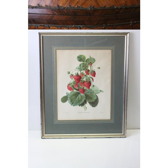Adorable framed strawberry print with scientific name, Fragaria Grandiflora. Perfect for the country kitchen. In green...