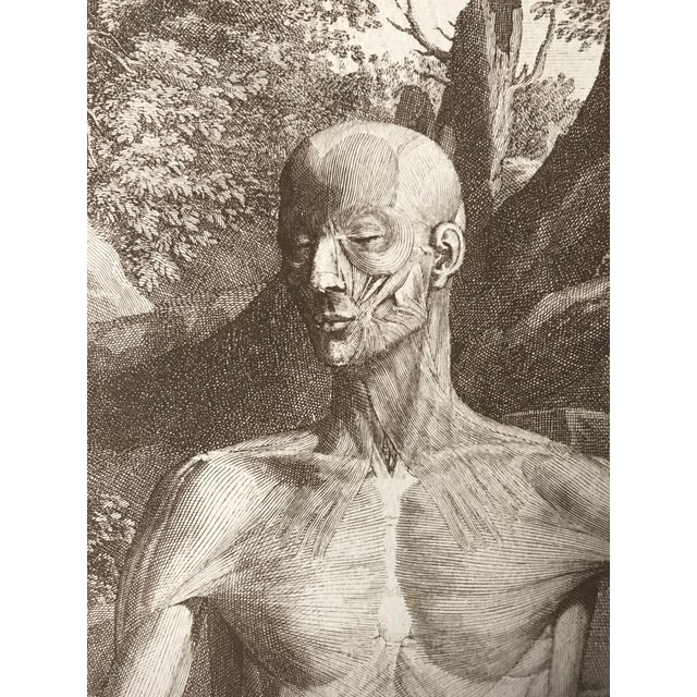 Late 19th Century Antique Anatomical Engraving by Jan Wandelaar For Sale - Image 5 of 7