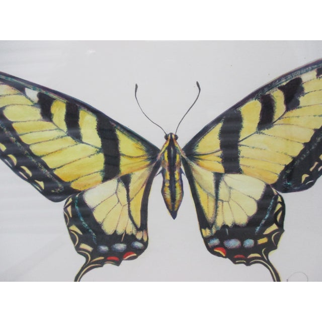 Western Tiger Swallowtail Butterfly Watercolor by Mary Ann Ho Original. Signed by the artist Wood Framed with glass Size:...