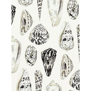 Sample, Scalamandre Coquina, Graphite Wallpaper For Sale
