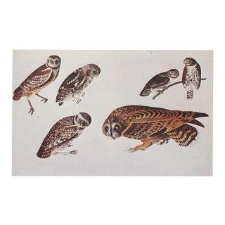 1960s Cottage Style Lithograph of Owls by John James Audubon