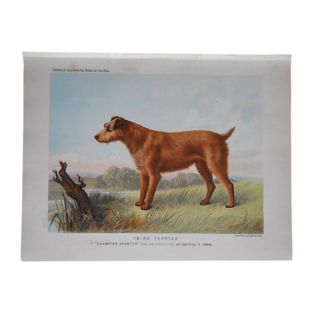 Antique Dog Irish Terrier Lithograph - Image 1 of 4