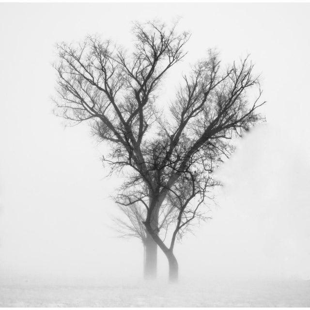 """Owen Whisenant """"Lone Tree"""" Framed Photo Print - Image 2 of 2"""