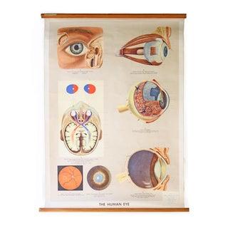 Vintage English Human Eye Diagram For Sale