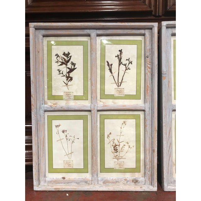 Pair of 21st Century Italian Dried Botanical Flowers in Painted Frames For Sale - Image 4 of 11