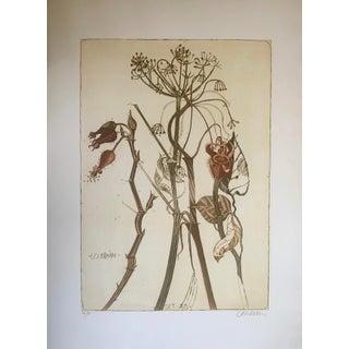 Brigitte Coudrain Botanical Aquatint Etching For Sale