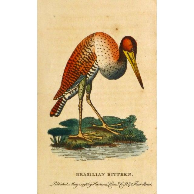 Antique Bird Print Engraving, Bittern, 1798 - Image 1 of 4