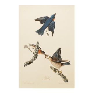 1990s Blue Bird by Audubon, Large Chinoiserie Print For Sale