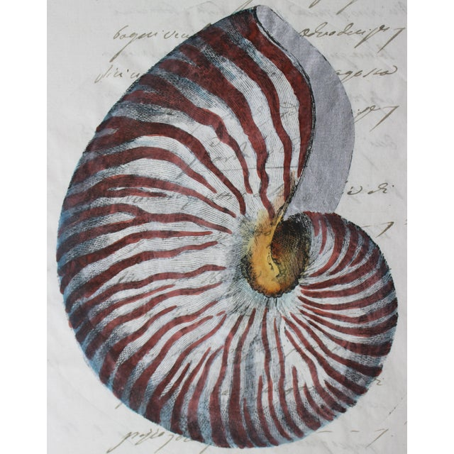 Realism Hand Painted Nautilus Shell on Parchment For Sale - Image 3 of 10