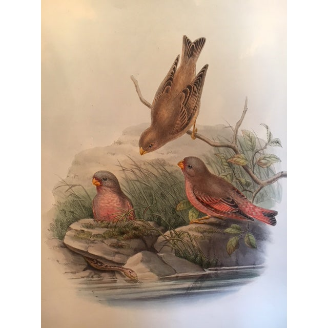 John Gould & William Hart Bird Illustration in the Age of Darwin For Sale - Image 10 of 11