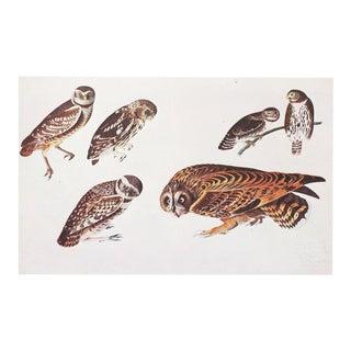 XL Audubon, 1966 Cottage Style Lithograph of Owls For Sale