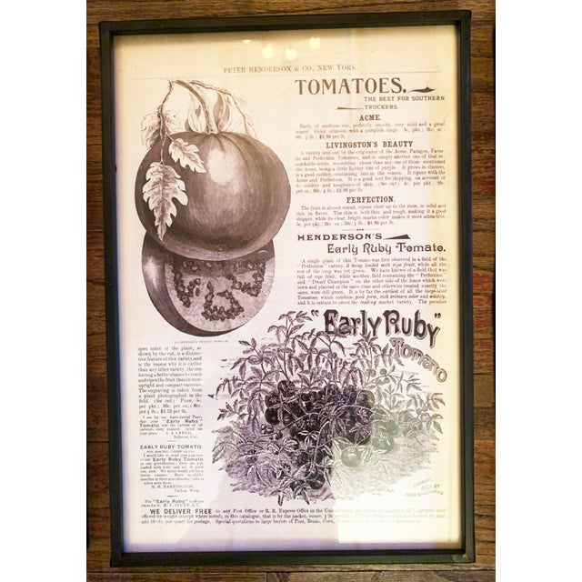 Farmhouse Framed Vintage Seed Catalog Page Print Reproductions - Set of 3 For Sale - Image 3 of 13