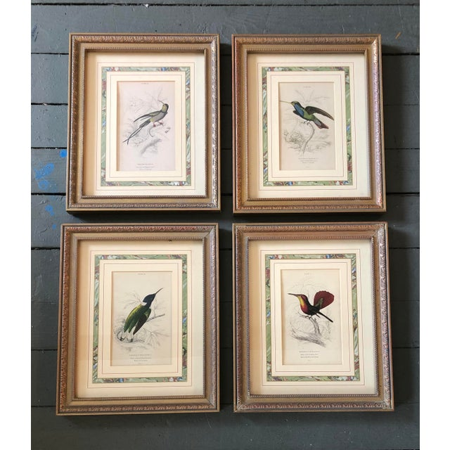 Gallery Wall Collection Set of 4 Vintage Hummingbird