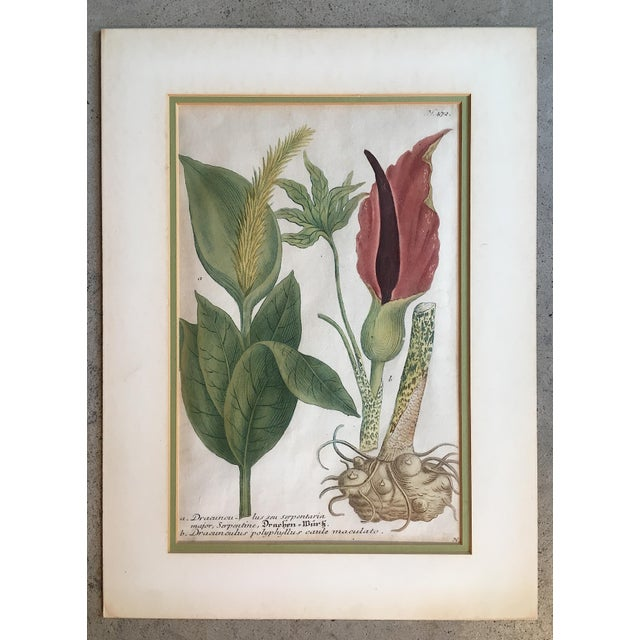 Hand Colored Botanical Print For Sale In New York - Image 6 of 6
