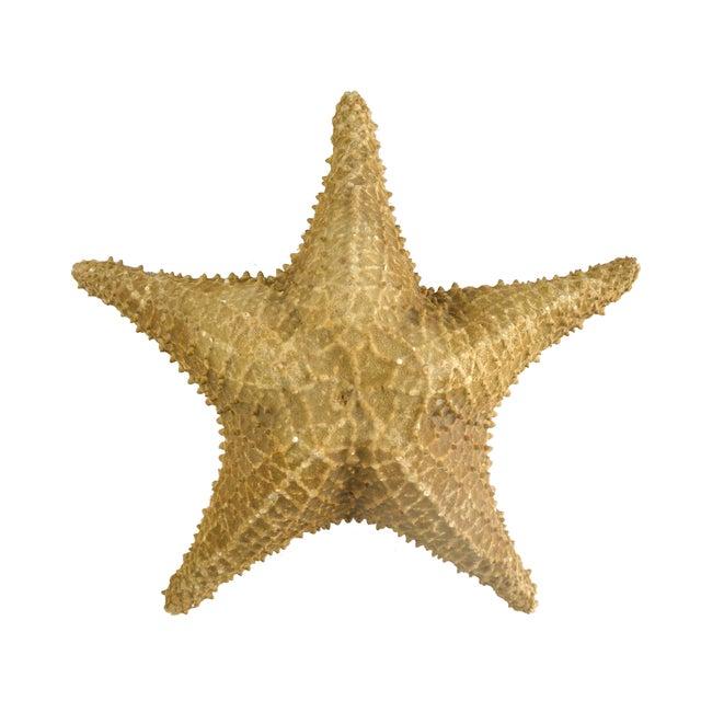 Vintage Nautical Starfish - Image 1 of 4
