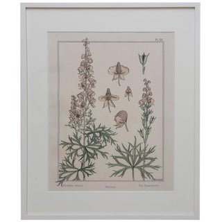 1940s Vintage Monks Hood Flower Drawing For Sale