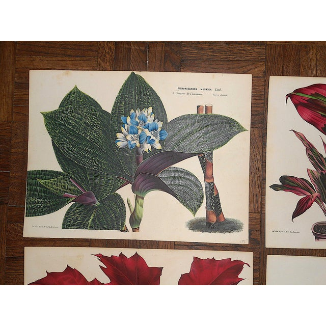Set of four (4) 19th C. chromolithographs (each color laid in with a separate lithographic stone) depicting botanicals...