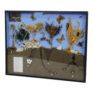 School Teaching Display Of Biosphere Of Poor Grassland For Sale