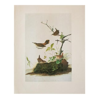1966 Vintage Cottage Print of Winter Wren and Rock Wren by Audubon For Sale