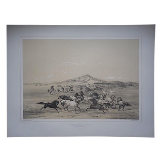 Wild Horses Limited Edition Print, George Catlin For Sale