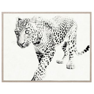Natural Curiosities Tylinek Leopard Framed Limited Edition Print For Sale