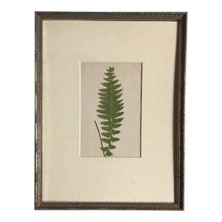 Late 19th Century Vintage English Sword Fern Lithograph For Sale