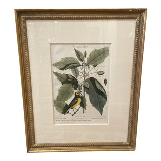 Mid 18th Century Catesby Botanical and Bird Print, Framed For Sale