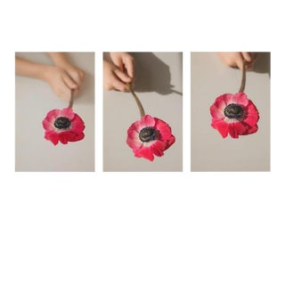 Hues: Pink Anemone, 2020' Set of 3 Contemporary Photographs by Claiborne Swanson Frank, Medium