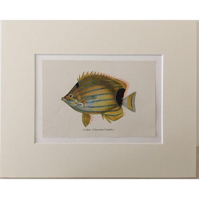 Hawaiian Fish Lithographs - A Pair - Image 2 of 5
