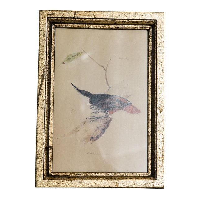 Natural History Print of Bird For Sale