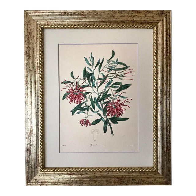 Etching Antique Floral Botanical Colored Etching 19th Century For Sale - Image 7 of 7