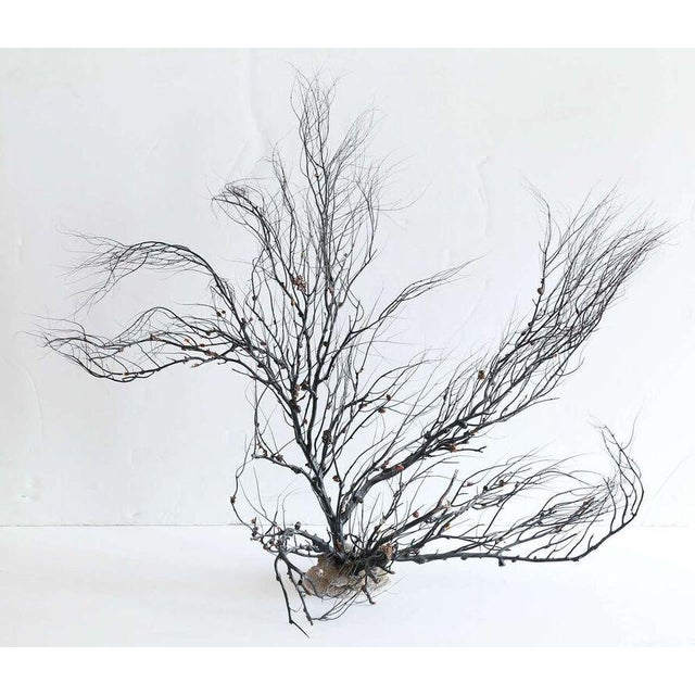 Brown Black Sea Whip Coral Sculpture For Sale - Image 8 of 8
