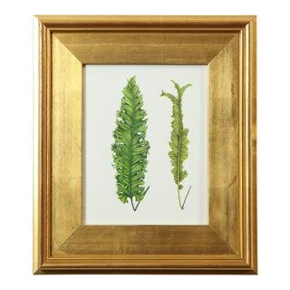 """""""Fern Fronds"""" Original Botanical Specimen Painting by Abigail Vogel For Sale"""