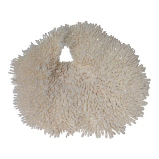 "Specimen ""Table"" White Coral"
