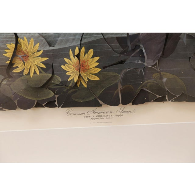 John James Audubon Butterfly Box Audubon Swan Print For Sale - Image 4 of 8