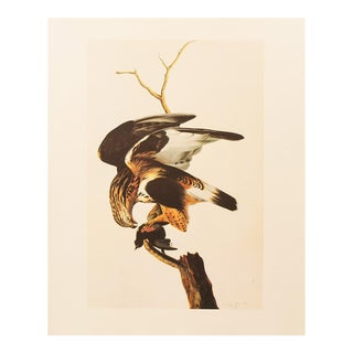 1960s Cottage Lithograph of Rough-Legged Hawk by Audubon For Sale
