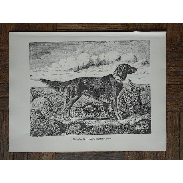 English Traditional Antique Hunting Dog Engravings - Set of 3 For Sale - Image 3 of 5