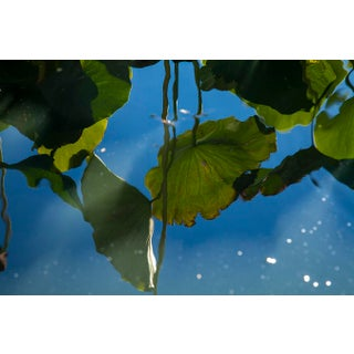 Waterlily Reflections 03 Photograph For Sale