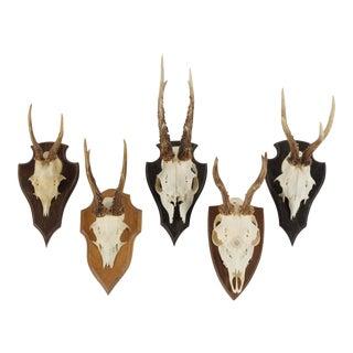 Vintage German Roe Deer Antlers - Set of 5